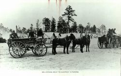 Supply Wagons Camp Sevier